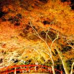 幻想的な雰囲気♪群馬の人気の温泉街、伊香保の河鹿橋の紅葉のライトアップ。