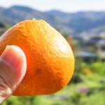群馬の秋のレジャーは500円で食べ放題・お土産付きのみかん狩り!
