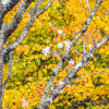 冬に桜を見たことありますか?冬桜と紅葉の群馬県藤岡市の桜山公園。