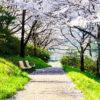 桜吹雪に遭遇!桐生の河川敷沿いは桜並木の名所♪